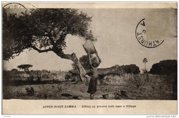 Upper River Gambia - Sifting Up Ground Nuts Near A Village 1921 ( 2 Scans) - Gambie
