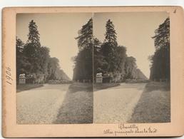 PHOTO  Stéréoscopique - CHANTILLY - Allée Principale Dans La Forêt - Stereoscopio