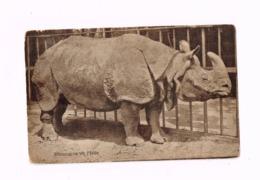 """Rhinocéros De L'Inde.""""M.Moorthamers,achat Et Vente De Livres Scolaires En Occasion"""" - Rhinozeros"""