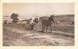 Agriculture: Labourage Avec 2 Chevaux Et Une Charrue à Soc Et Mancheron - Lieu à Identifier (Bord De Mer) 1914 - Culture