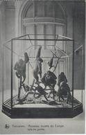 Tervueren   Nouveau Musée Du Congo. - Tervuren