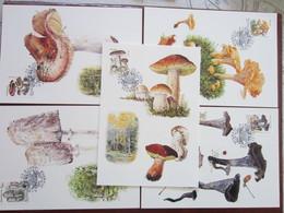 Maximum Cards Sweden 1996 Mushrooms  (Complete Set) (Maxi 1 - 5 ) - Tarjetas – Máxima