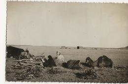 TINDOUF - Sahara Occidental - Piste Impériale N° 1 - Campement R'Guibat - Maroc