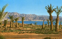 Israel - Eilat - Red Sea - Israel