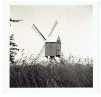 OOSTERWIJK - Tongerlo - Kleine Foto  5,8 X 5,8 Cm + Molen - Gesloopt 1964 - Overgeplaatst Vanuit Wechelderzande In 1924 - Westerlo