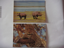 Lot De 2 Cartes (16,5 Cm X 12 Cm) D'animaux De TANZANIE ( Rhinocéros - Léopard ) - Tanzanie
