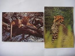 Lot De 2 Cartes (16,5 Cm X 12 Cm) D'animaux De KENYA ( Lion - Guépard ) - Kenya