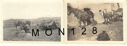 AGRICULTURE - MOISSONNEUSE LIEUSE ET ATTELAGE DE 3 CHEVAUX 1946 - 2 PHOTOS D'EPOQUE 8,5x6 Cms - Beroepen