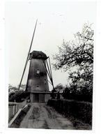 HOOGSTRATEN - 2 Kleine Foto's 9,5 X 6,5 Cm - Opname Van Molen 1952 - 1 Foto Met Wieken - 1 Foto Zonder Wieken - Hoogstraten