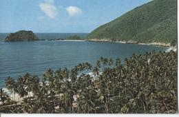 Playa Colorado - Palm Tree - Palm Bomen - Venezuela