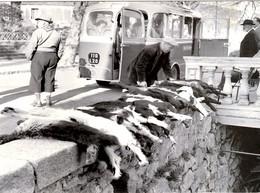 CORSE -- U Passu Tempu - CHEVRES A PIANA - 1955 - France
