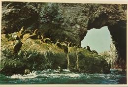 (681) Peru - Islas Ballestas - Seals And Sea Lions - Pérou
