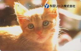 Rare Télécarte Japon / 110-011 - ANIMAL - CHAT Roux  - CAT Japan Phonecard - KATZE -GATTO - GATO -  5005 - Chats
