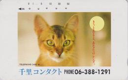Télécarte Japon / 290-10362 - ANIMAL - CHAT Roux  - CAT Japan Phonecard - KATZE -GATTO - GATO -  5007 - Chats
