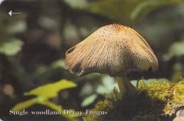JERSEY ISLANDS. Setas - Mushrooms-CHAMPIGNONS-FUNGHI. Single Woodland Decay Fungus. 71JERC. (406) - Flores