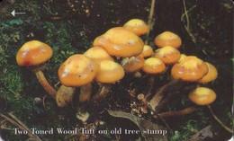 JERSEY ISLANDS. Setas - Mushrooms-CHAMPIGNONS-FUNGHI. Two Toned Wood Tuft. 71JERB. (403) - Flores