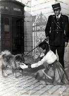 Grande Photo Originale Gendarme Promenant Son Chien Chow-chow En Laisse Et Petite Fille Le Caressant Vers 1960 - Berufe