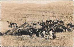 CPA-1955-AFRIQUE-ALGERIE- TENTES De NOMADES--TBE - Scènes & Types