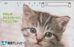 Télécarte Japon / 110-016 - ANIMAL - CHAT Gris ** Telemessage ** - CAT Japan Phonecard - KATZE  - GATTO - GATO - 5019 - Gatos