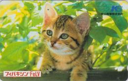 Télécarte Japon / 110-016 - ANIMAL - CHAT Roux ** KS ** - CAT Japan Phonecard - KATZE - GATTO - GATO - 5032 - Chats