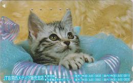 Télécarte Japon / 110-011 - ANIMAL - CHAT ** JTB ** - CAT Japan Phonecard - KATZE - GATTO - GATO - 5033 - Gatos