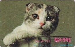 RARE Télécarte Japon / 110-122351 - ANIMAL - CHAT ** SCOTTISH FOLD ** - CAT Japan Phonecard - KATZE - GATTO - 5036 - Chats