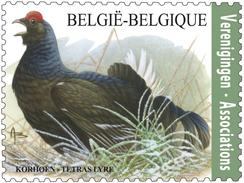 Buzin 4305** Korhoen** Tétras-Lyre - Black Grouse MNH - Belgium