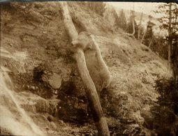 SERBIE OURS BEARS OSOS BEREN   10*8CM Fonds Victor FORBIN 1864-1947 - Fotos