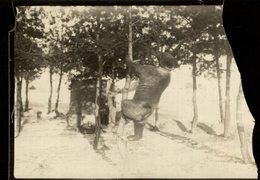MASCOTTE RUSSE RUSIA PET  OURS BEARS OSOS BEREN   10*8CM Fonds Victor FORBIN 1864-1947 - Fotos