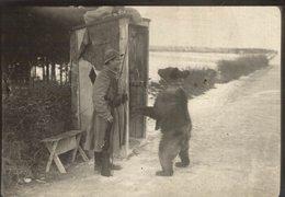 RUSSE RUSIA    OURS BEARS OSOS BEREN   10*8CM Fonds Victor FORBIN 1864-1947 - Sin Clasificación