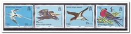 Britse Maagdeneilanden 1980, Postfris MNH, Birds - Britse Maagdeneilanden