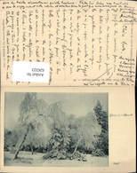 626323,L Hiver Dans Les Hautes-Vosges Altmatt Baum Rothenthurm Switzerland - Ohne Zuordnung