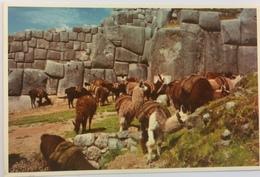 (708) Peru - Cuzco - Ruins Of Sacsahuaman - Lamas - Pérou