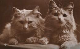 AR56 Animals - 2 Cats - RPPC - Cats