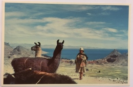 (712) Peru - View Of Lake Titicaca - Lamas - Pérou