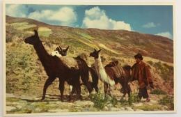 (714) Peru - Native With Llamas In The Peruvian Highlands - Pérou