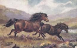 AR57 Animals - Shetland Ponies - Artist Harry Payne, Tuck Oilette - Paarden