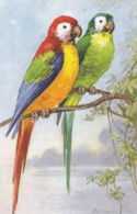 AS78 Animals - Birds - 2 Parrots By Wagner - Birds