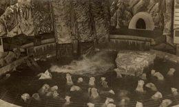 70 POLAR BEARS POLAIRES  OURS BEARS OSOS BEREN   15*10CM Fonds Victor FORBIN 1864-1947 - Fotos