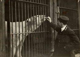 THE ZOO POLAR POLARIS OURS BEARS OSOS BEREN    DOG CHIEN 16*12CM Fonds Victor FORBIN 1864-1947 - Fotos