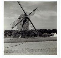 WORTEGEM - 2 Kleine Foto's 9 X 9 Cm + 1 Kleine Foto 9 X 6,5 Cm - Stuivenberg Molen Aug.1961 - Wortegem-Petegem