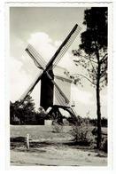 KASTERLEE - Oude Standaardmolen - Echte Foto - Uig. E. Beersmans - Kasterlee