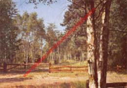 Hof Ter Linden - Lommer Onder De Berken - 's Gravenwezel - Schilde - Schilde