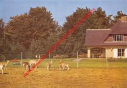 Hof Ter Linden - Hertenpark - 's Gravenwezel - Schilde - Schilde