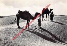 Tripoli - Cammellieri Nel Deserto - Libie Libya - Libye