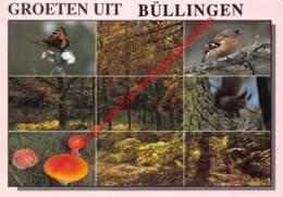 Natuur - Büllingen - Bullange - Buellingen