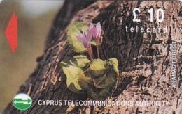 Cyprus, 16CYPC, £10 Wild Flowers Of Akamas Forest, Gray Stripe On Backside, 2 Scans. - Cyprus