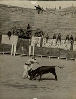 TAUREAUX VAQUILLAS TOROS NARBONNE  16*12CM Fonds Victor FORBIN 1864-1947 - Fotos