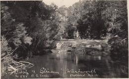 Postcard Bush & Stream Man On Horse Warkworth Auckland New Zealand Or New South Wales Australia ?  My Ref  B13515 - Postcards