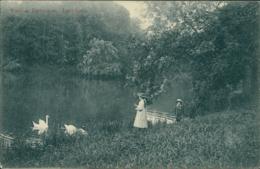 BE TERVUEREN / Enfants Au Bord D'un étang Et Cygnes / - Tervuren